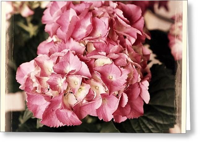 Hydrangea on the Veranda Greeting Card by Carol Groenen