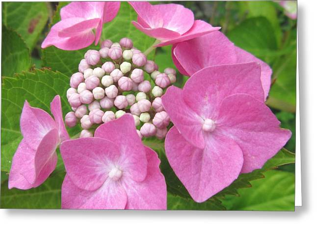 Flower Photos Greeting Cards - Hydrangea Posy Greeting Card by John Clark