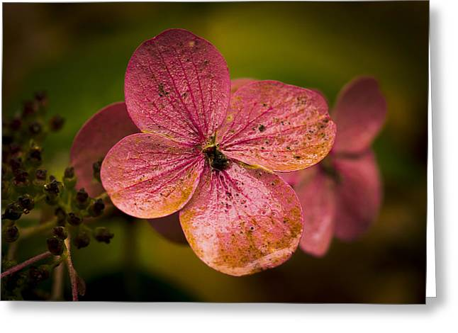 Ron Roberts Photography Photographs Greeting Cards - Hydrangea Greeting Card by Ron Roberts