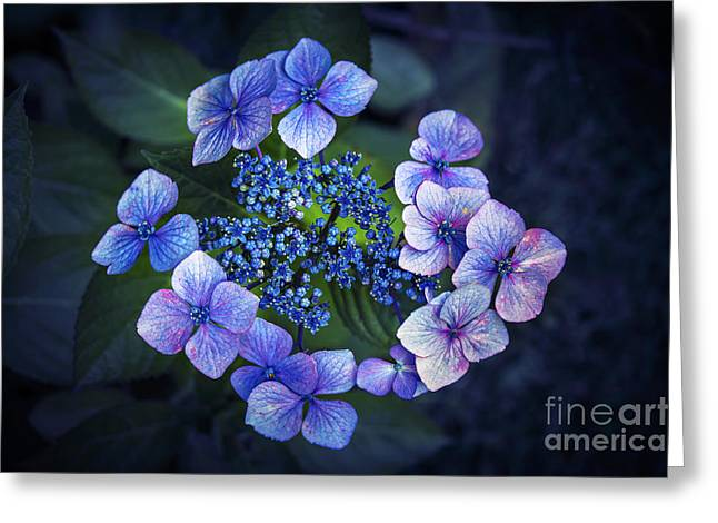 Fresh Green Greeting Cards - Hydrangea Greeting Card by Svetlana Sewell