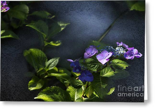 Lacecap Greeting Cards - Hydrangea Violet-Blue Greeting Card by Belinda Greb
