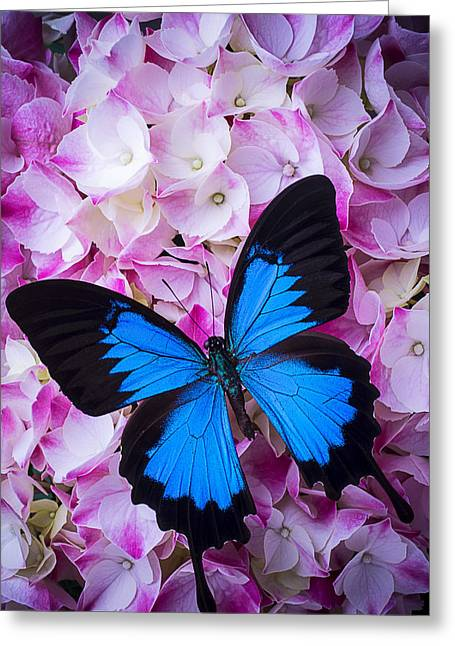 Blue Mood Greeting Cards - Hydrangea With Blue Butterfly Greeting Card by Garry Gay