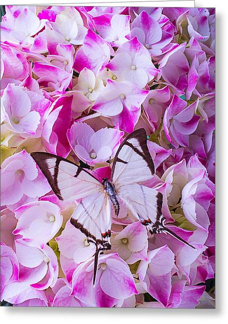 White Butterfly Greeting Cards - Hydrangea With Bright White Butterfly Greeting Card by Garry Gay