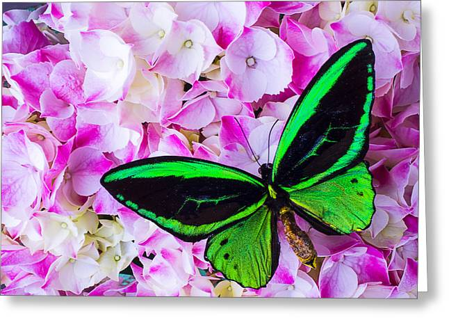 Exotic Photographs Greeting Cards - Hydrangea with Green Butterfly Greeting Card by Garry Gay