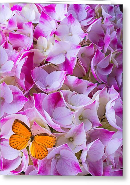 Antenna Greeting Cards - Hydrangea With Orange Butterfly Greeting Card by Garry Gay