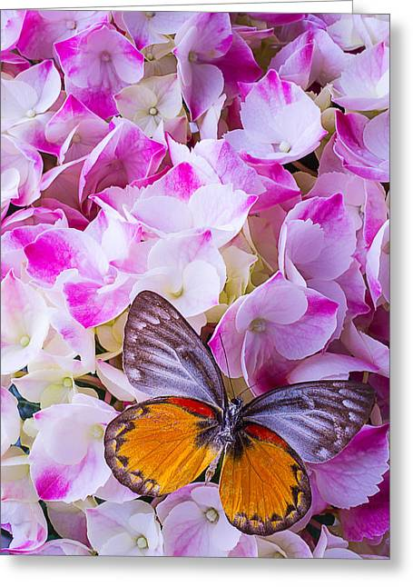 Antenna Greeting Cards - Hydrangea With Orange Gray Butterfly Greeting Card by Garry Gay