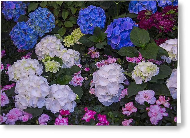 Hydrangeas Greeting Cards - Hydrangeas Greeting Card by Garry Gay