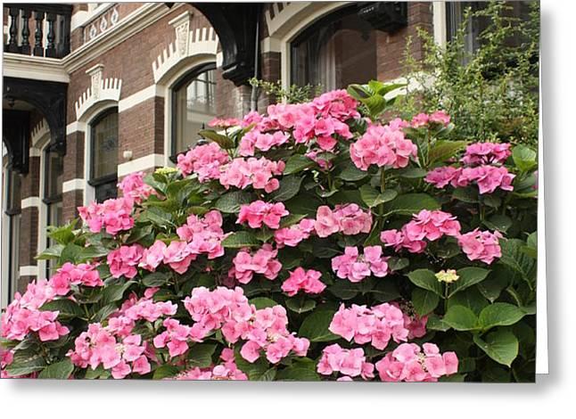 Hydrangeas in Holland Greeting Card by Carol Groenen