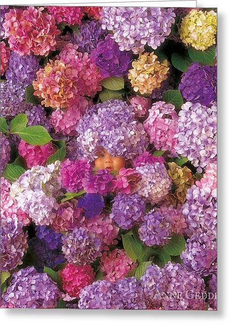 Nurseries Greeting Cards - Hydrangiss Babyiss Rare Bloom Greeting Card by Anne Geddes