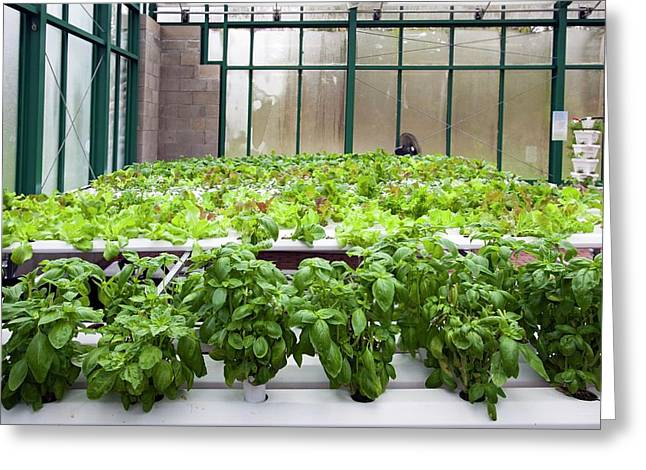 Hydroponic Greenhouse Greeting Card by Jim West
