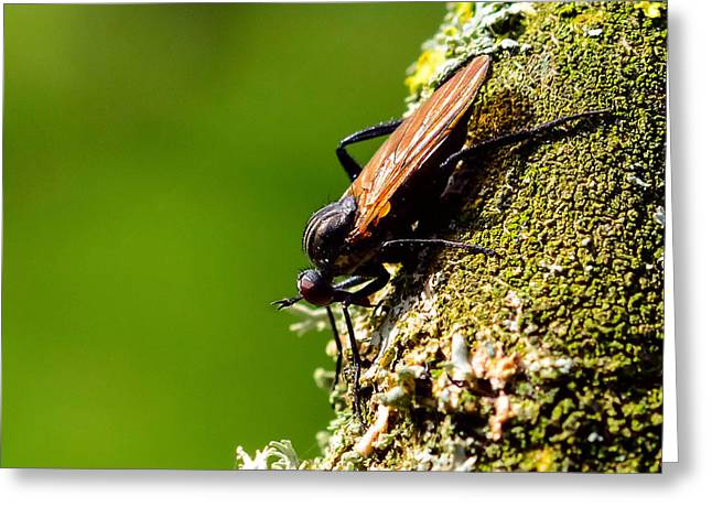 Nature Study Greeting Cards - Hymenoptera Greeting Card by Toppart Sweden