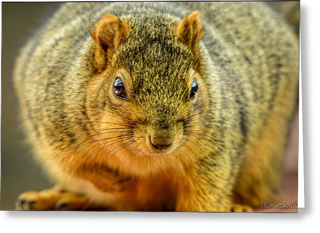 Sciurus Carolinensis Greeting Cards - Hypno Squirrel Greeting Card by LeeAnn McLaneGoetz McLaneGoetzStudioLLCcom