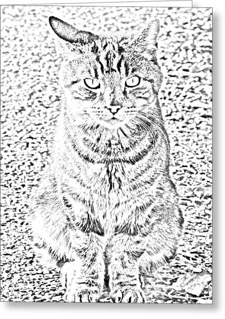 G. Pawer Greeting Cards - Hypnotic Kitty Greeting Card by J D Owen
