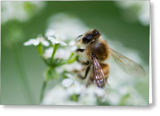 I am busy - Featured 3 Greeting Card by Alexander Senin