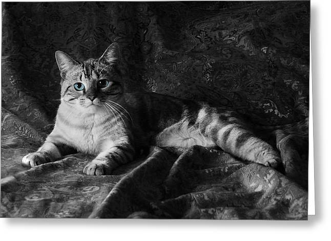 Siamese Cat Greeting Card Greeting Cards - I am Cat Greeting Card by Kathleen Horner