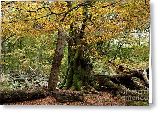 Primeval Greeting Cards - I am here since almost 1000 years Greeting Card by Heiko Koehrer-Wagner