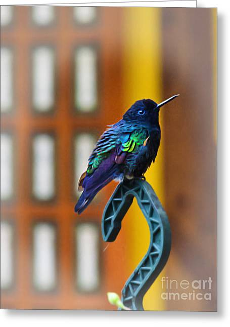 Hovering Greeting Cards - I Am Just Short For My Weight Greeting Card by Al Bourassa