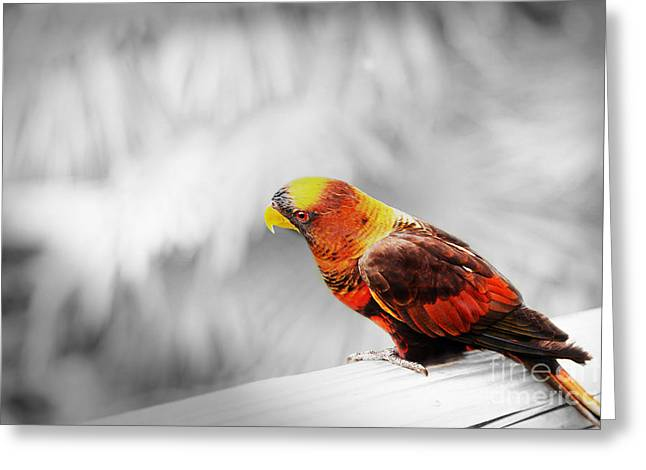Rainbow Lorikeets Greeting Cards - I am Listening Greeting Card by Eden Baed