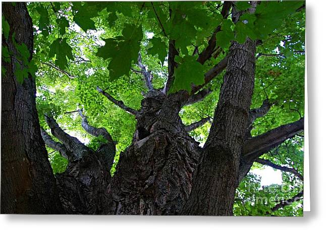 Ent Greeting Cards - I Am No Tree Greeting Card by Sharon L Stacy