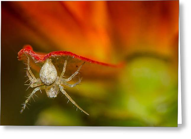 Spider Flower Greeting Cards - I am spiderman Greeting Card by Tin Lung Chao
