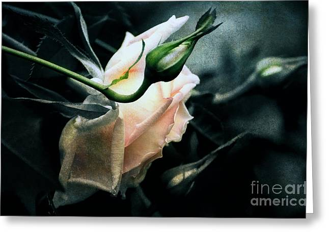 Texture Floral Greeting Cards - I Am Your Ghost Of A Rose Greeting Card by Georgiana Romanovna