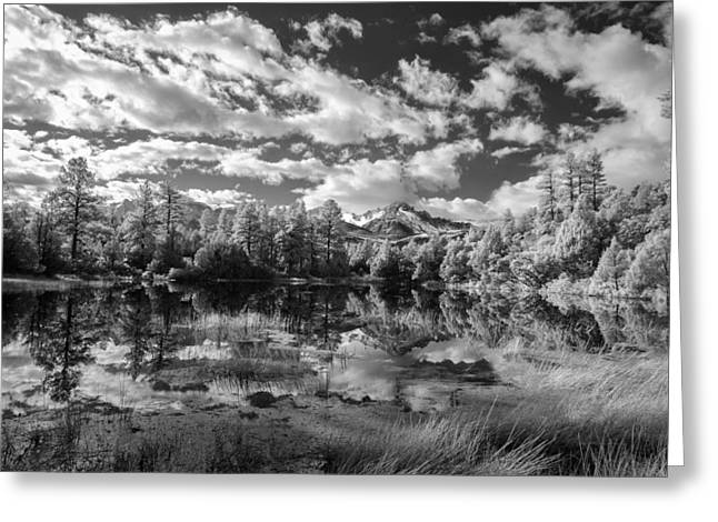 Fine Art White Nature Trees Greeting Cards - I Came to Look Greeting Card by Jon Glaser