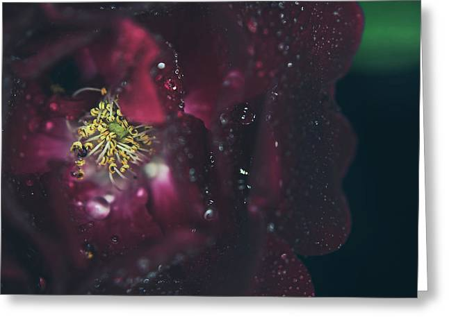 Dew Drop Greeting Cards - I Can Feel Your Heart Beating Greeting Card by Laurie Search