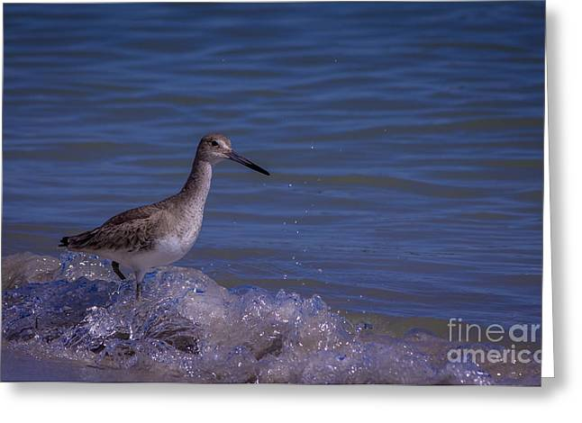 Wading Bird Greeting Cards - I Can Make It Greeting Card by Marvin Spates