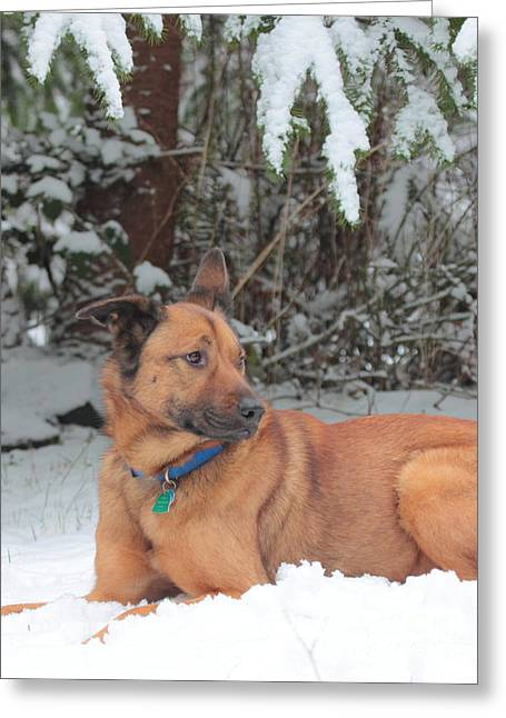 Dog In Snow Greeting Cards - I can pose   For two seconds Greeting Card by Rod  Giffels