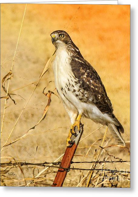 Red Tail Hawk Digital Art Greeting Cards - I Can See Clearly Greeting Card by Betty LaRue