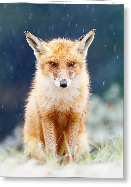 Pouring Greeting Cards - I Cant Stand the Rain  fox in a rain shower Greeting Card by Roeselien Raimond