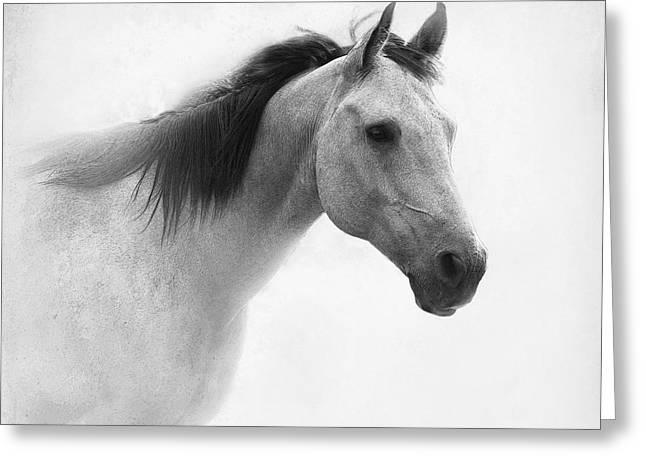 Quarterhorses Greeting Cards - I Dream of Horses Greeting Card by Betty LaRue