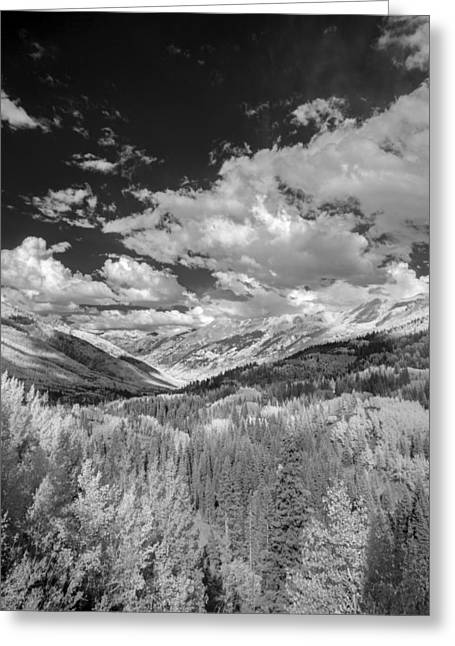 Fine Art White Nature Trees Greeting Cards - I Feel Alive Greeting Card by Jon Glaser