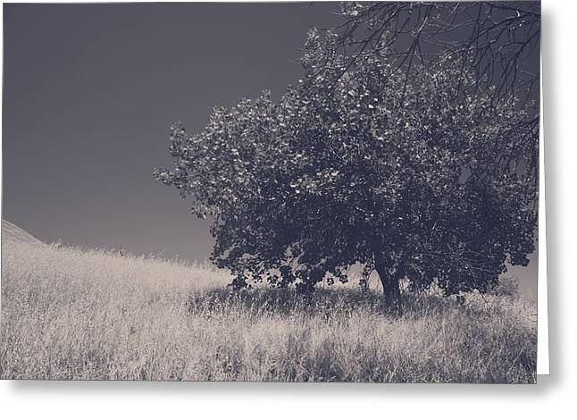 One Tree Greeting Cards - I Feel You Watching Over Greeting Card by Laurie Search
