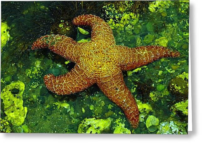 I Found A Starfish Greeting Card by Jeff Swan