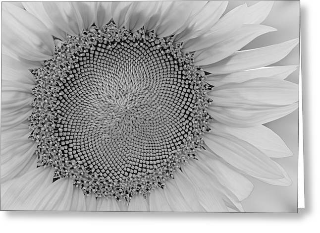 Sunflower Greeting Cards - I Got Sunshine BW Greeting Card by Susan Candelario