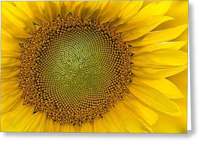 Sunflowers Greeting Cards - I Got Sunshine Greeting Card by Susan Candelario