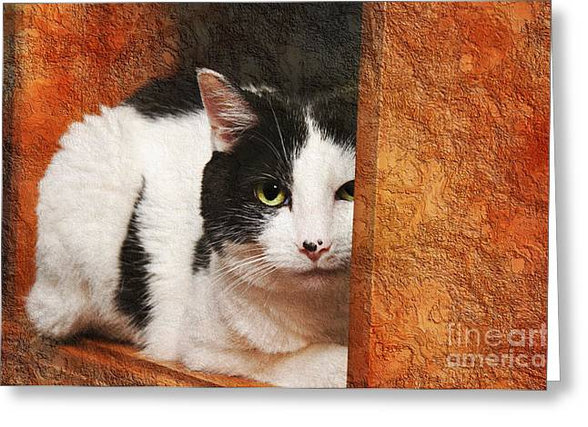 Cute Mixed Media Greeting Cards - I Have My Eye On You Greeting Card by Andee Design