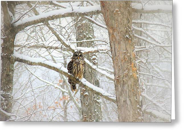 Winter Scene Digital Art Greeting Cards - I Have My Eyes On You Greeting Card by Sharon Batdorf