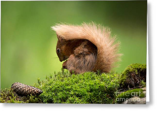 Hiding Greeting Cards - I Hide Under My Tail Greeting Card by Louise Heusinkveld