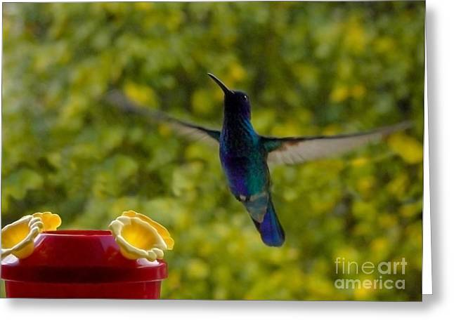 Flyer Greeting Cards - I Hover For Food Greeting Card by Al Bourassa