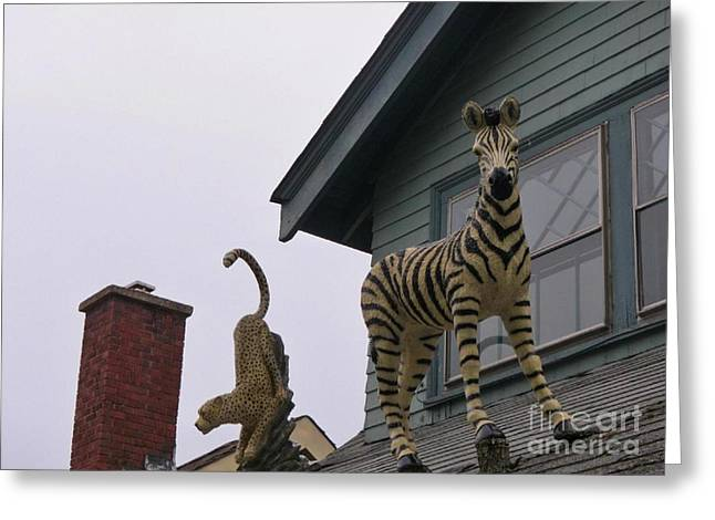 Halifax Photographs Greeting Cards - I Just Know That Leopard Behind Me Is Up To No Good Greeting Card by John Malone
