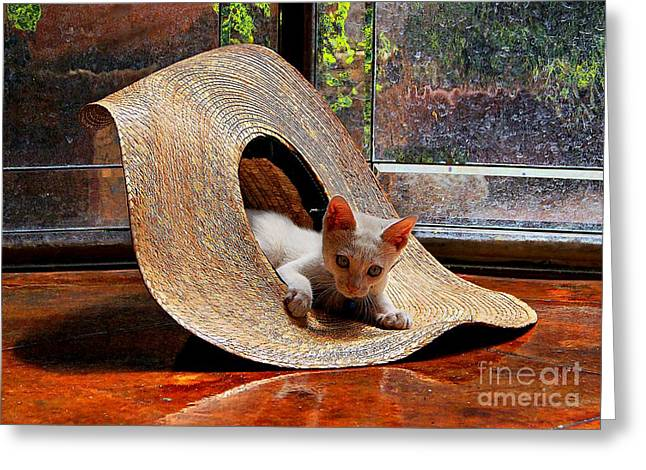 John Kolenberg Greeting Cards - I Just Love My New Hat Greeting Card by John  Kolenberg