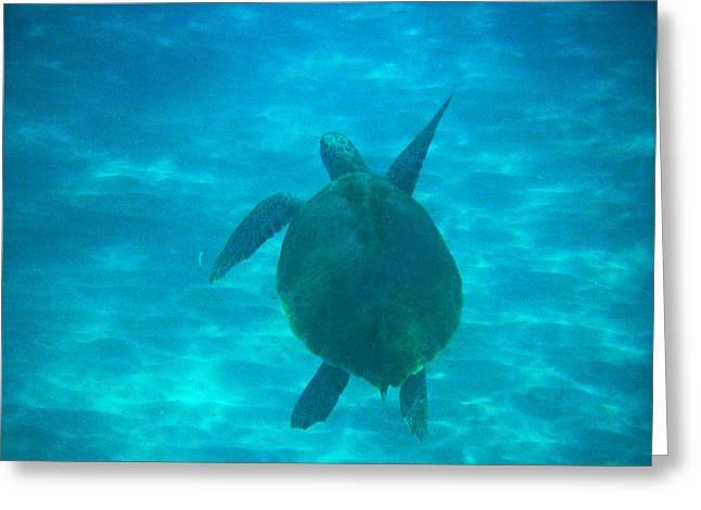 Undersea Photography Digital Art Greeting Cards - Aquatic Life Sea Turtles - I Like To Dance Greeting Card by James Turnbull