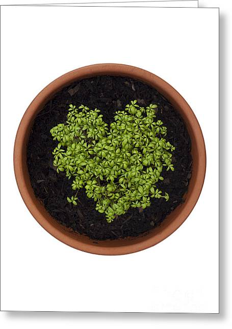 Germinate Greeting Cards - I Love Cress Greeting Card by Anne Gilbert