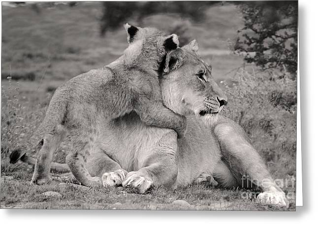Lioness Greeting Cards - I love my Momi Greeting Card by Christine Sponchia
