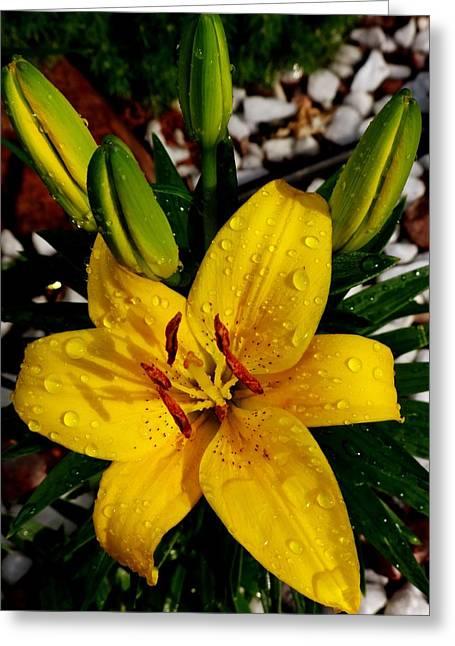 Lilies Pyrography Greeting Cards - I love rain.. Greeting Card by Cristina Mihailescu