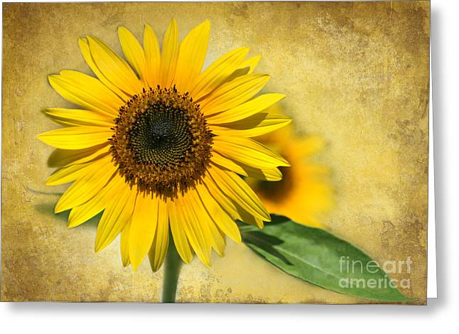Sunflower Joy Greeting Cards - I Love Sunflowers Greeting Card by Sabrina L Ryan