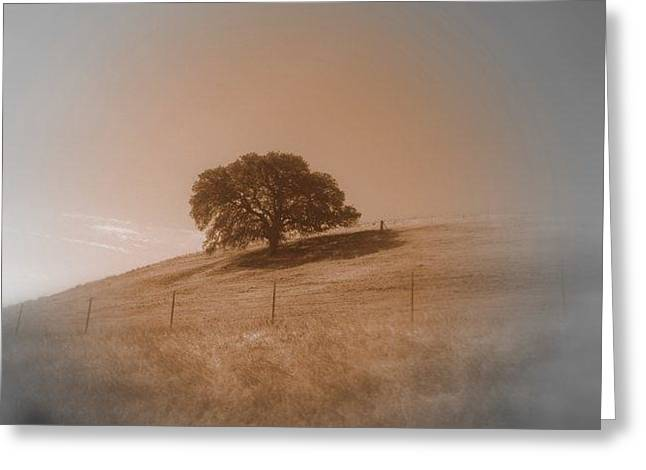 The Followers Greeting Cards - I LOVE Tree Greeting Card by Henry Adams