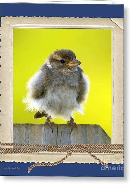 Baby Bird Greeting Cards - I Miss My Nest Greeting Card by Betty LaRue